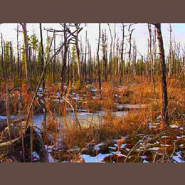 #trees #landscape