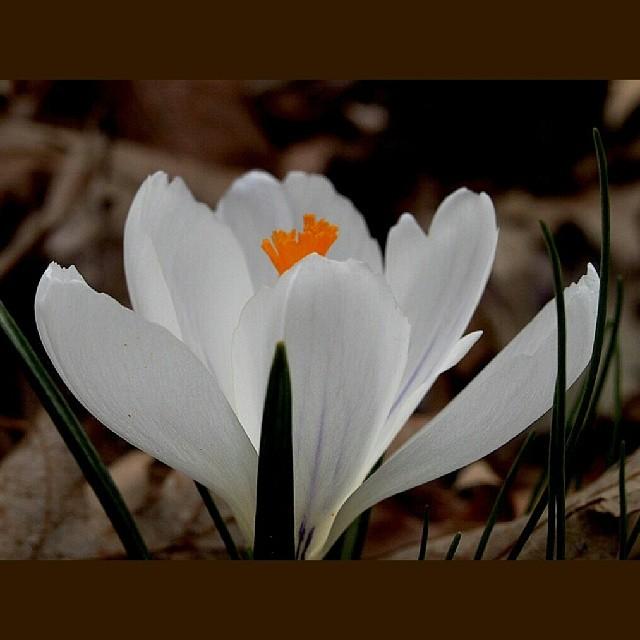 #spring flowers